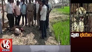 Cheetah Attack On Goats And Calf In Ramayampet | Villagers In Panic Situation