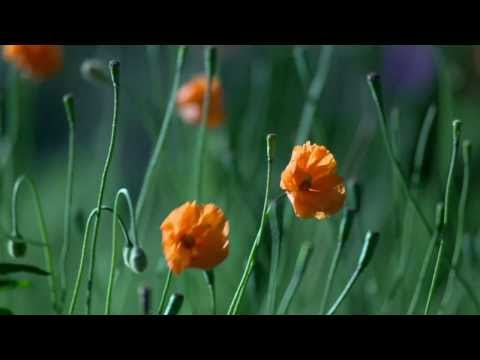 Orange Flowers video
