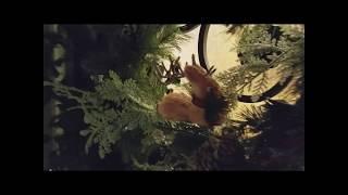 Видео на конкурс форума tutnetam.com лучших елочек от  Podrujka, Рождество в США