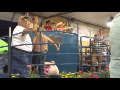 Ozaukee County Fair 2015 Livestock Auction