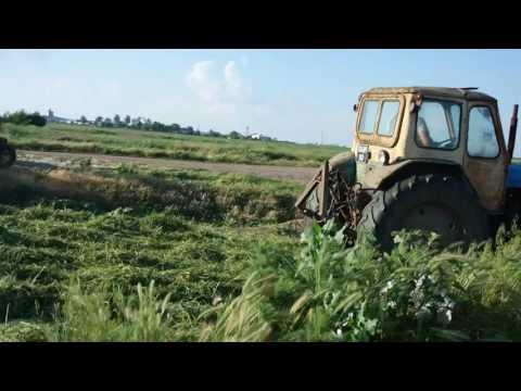 Заготовка сенажа с люцерны