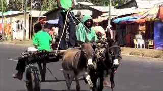 Jamharics: The Children of Zion (Rastafari settlement in Shashemene, Ethiopia)