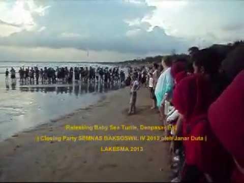 Baby Sea Turtle | Releasing Baby Sea Turtle by BSTS | Semnas Baksoswil PTBMMKI
