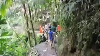 Inside El Yunque    A tropical Forest    XXX  Rain Forest