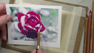 Drawing Snow on a Rose | Pastel Pencils