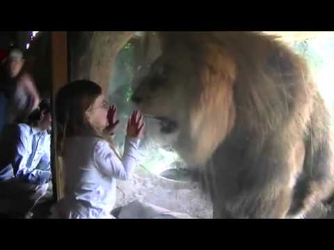 Niña responde con un beso al ataque de un león