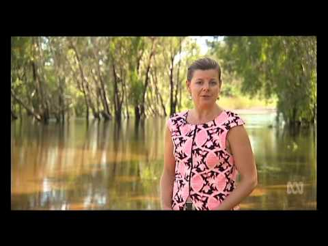Kakadu traditional owners call for gill fishing ban after crocodile deaths