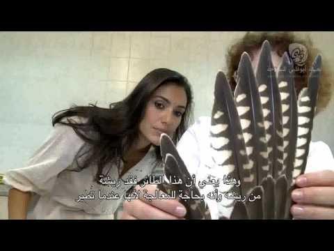 AbuDhabiFalconHospital  - Abu Dhabi Week TV