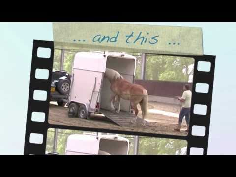 Online Video Course *Horse Trailer Loading* with Eddy Modde