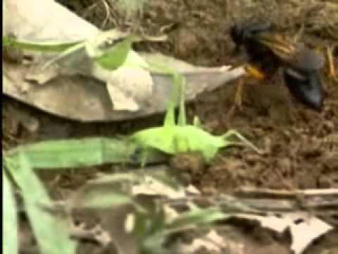 【陽明山國家公園管理處】六足王國-柑橘園中的昆蟲生態