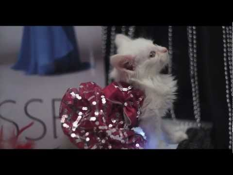 Funny Video - The Cat Back Into Catwalk