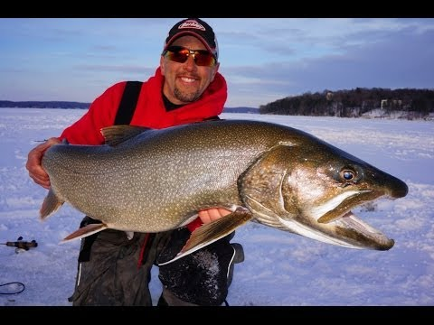 Http videolike for Ice fishing lake trout