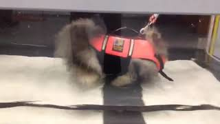 Tesla Gorgevska Underwater treadmill 12/13/18