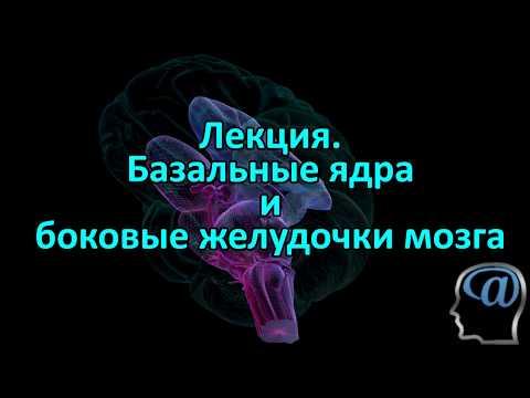 Базальные ядра и желудочки мозга. Лекция.