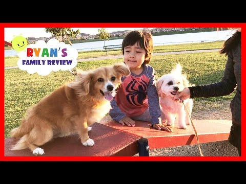 Kids fun playtime at playground and dog park with Ryan's Family Review