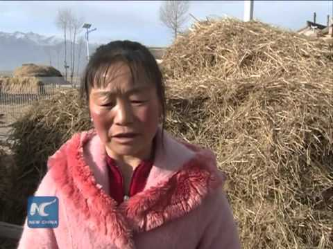 9 people wounded in earthquake that jolts China's Qinghai