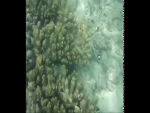 Veligandu - Snorkling (1)