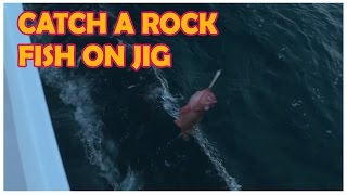 How to catch a Rock Fish on a jig by Dan Hernandez | SPORT FISHING