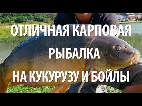 отличная рыбалка на карпа видео