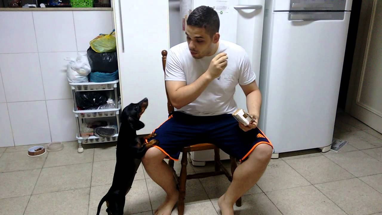 [Genius Pet Owner Uses Reverse Psychology To Trick Dog Into Eating His Medicine] Video
