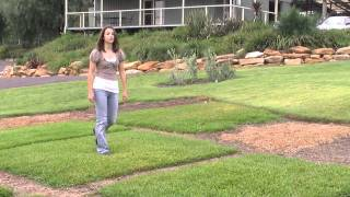 Palmetto Soft Leaf Buffalo Turf | The Low Maintenance Lawn