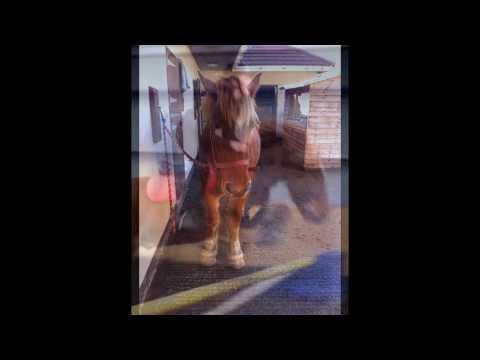 My Pony Onion Xxx video