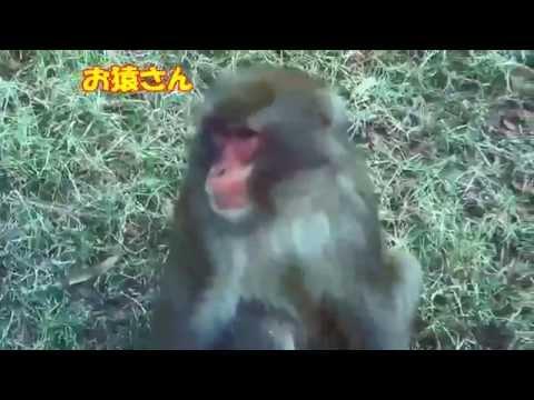部門賞群馬サファリパークイメージ