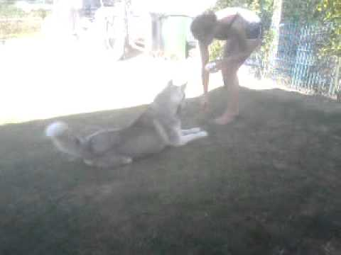 Gay Dog. ♥ video