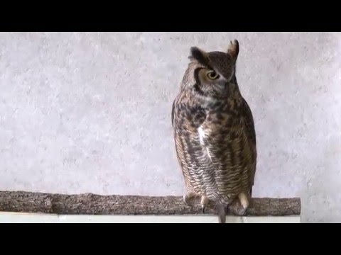 Hello Nepal Owl Festival from the International Owl Center