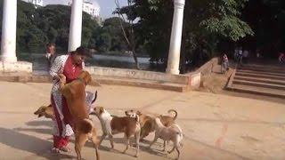 Love for dogs || ধানমণ্ডি লেকের কুকুরদের জন্য এক তরুণীর বিরল ভালোবাসা