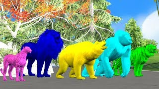 Colors Animals Finger Family Song for Kids,children,Gorilla,Lion,Tiger,cheetha,bear,arcusnmedia Kidz