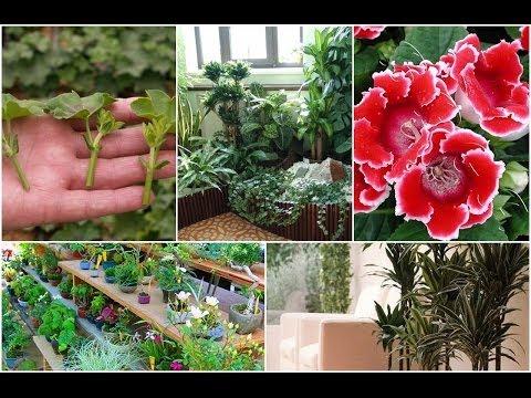 Размножение цветов и декоративных растений от А до Я – СПОСОБЫ