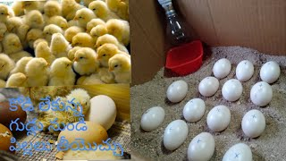Homemade hatching eggs ।। chiks hatched without hen ।। how to make an egg # all in one