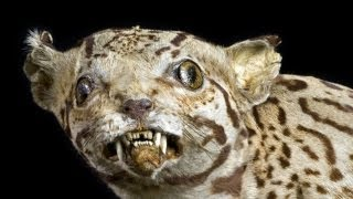 Why Don't We Taxidermy Humans?