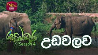 Sobadhara - Sri Lanka Wildlife Documentary | 2020-07-03 | Udawalawa (උඩවලව)
