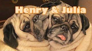 Henry Julia The Pugs Are Famous Children 39 S Bedtime Story Meditation