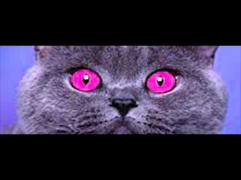 Cats Eyes Change Color Change to Color Cat Eyes