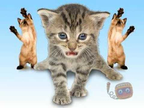 Kitties Singing Joy-Joy-Joy!