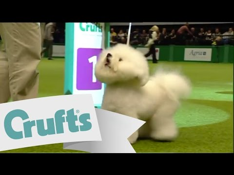dfs Crufts 2011  - Best In Group Toy
