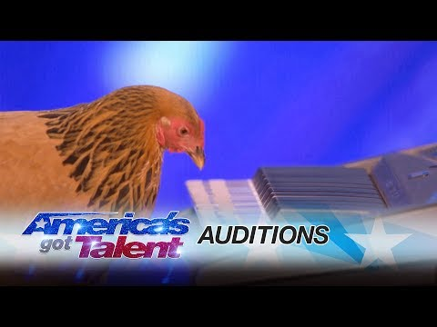 Jokgu of the Flockstars: Chicken Plays Patriotic Tune on Keyboard - America's Got Talent 2017
