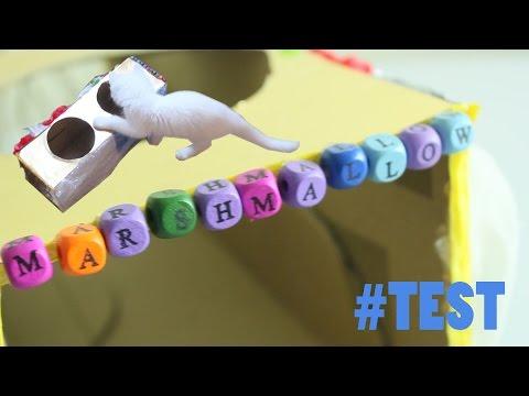 Jak Zrobić Domek Dla Kota? #TEST