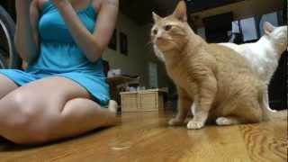 Kitties and Cat Nip Toys