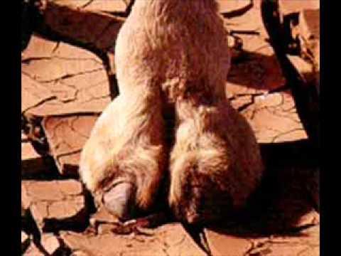 TKGM- Camel Toe thumbnail