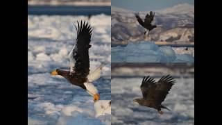 Kingdom of Eagles ~Dawn of the sea of Okhotsk~