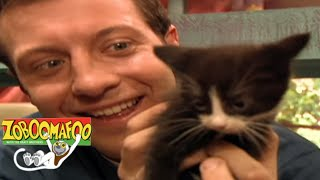 Animals Show For Kids | 🐒 Zoboomafoo 137 - Cats | Full Episode🐒 🐱