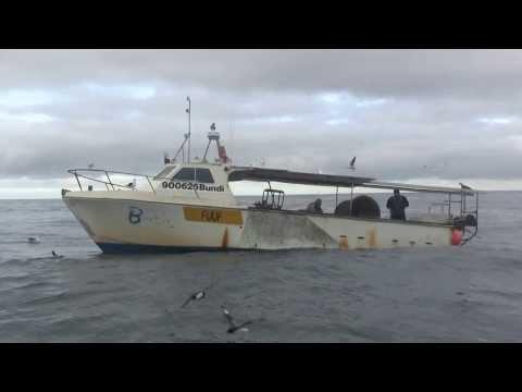 Fishing Boat & Pelagic Birds. Рыболовный катер и морские птицы; Н.Зеландия (polozov2219)