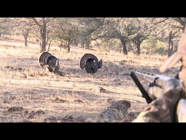 Turkey Hunting: Mucho Fun in Mexico