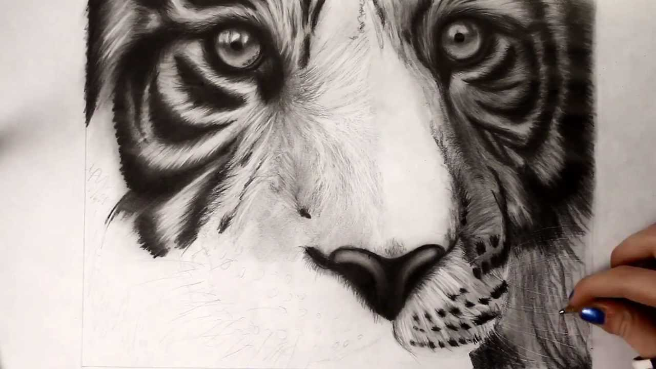 White Tiger Head Drawing