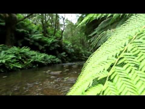 Conservation Ecology Centre - National Landscapes: Great Ocean Road by Wildiaries