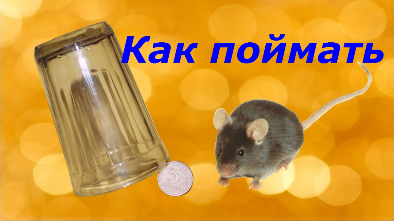 Ловушки для мышей быстро